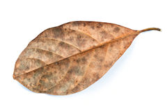 Dead leaf Royalty Free Stock Photography