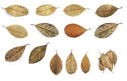 Dead leaf Royalty Free Stock Photos