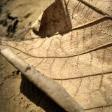 Dead leaf falls from tree in summer Stock Images