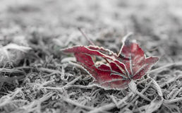 Dead leaf in frost Royalty Free Stock Photos