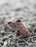 Dead leaf in frost Royalty Free Stock Photo