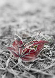 Dead leaf in frost Stock Images