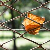 Dead leaf Stock Image