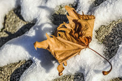 Dead leaf over snow Stock Photography