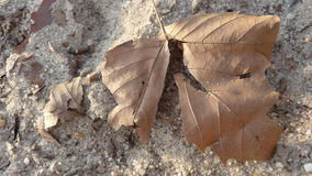 Dead Leaf in the Sand Stock Images