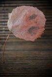 Dead leaf of the tree Royalty Free Stock Photo
