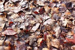 Dead leaves Royalty Free Stock Photo