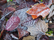Dead leaves Royalty Free Stock Photos