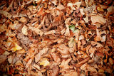 Free Dead Leaves Royalty Free Stock Photos - 31799468
