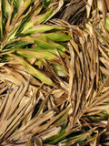 Dead leaves. Pile of newly cut palm leaves royalty free stock images