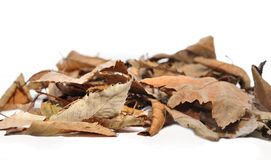 Free Dead Leaves Royalty Free Stock Photography - 45037577
