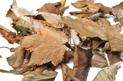 Free Dead Leaves Stock Image - 45037671