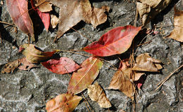 Dead leaves Royalty Free Stock Images