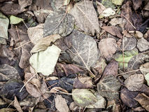 Dead leaves Stock Photography