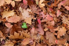 Free Dead Leaves Background Stock Photo - 52802300