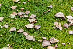 Dead leaves Stock Images