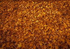 Dead leaves in the fall. Royalty Free Stock Photography