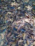 Dead leaves Royalty Free Stock Image