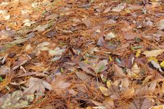 Dead leaves in a forest Royalty Free Stock Photography