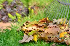 Dead leaves in garden Stock Photography
