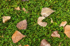 Dead leaves on the grass Royalty Free Stock Image