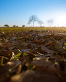 Dead Leaves on Grass in a Park Stock Photos