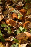 Dead leaves on the ground. Orange and brown dead leaves on the ground during Autumn stock images