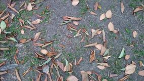 Dead leaves on the ground Royalty Free Stock Photos