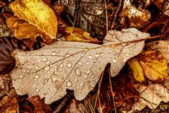 Dead leaves Stock Image