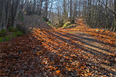 Dead Leaves path Royalty Free Stock Photos