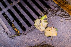 Dead Leaves On The Road Next To A Storm Drain Stock Photography