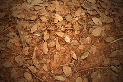 Dead leaves shot ideal for backgrounds. And textures Royalty Free Stock Photo