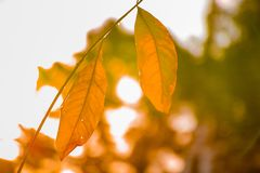 Dead leaves on stem against bright blurry background royalty free stock images