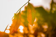 Dead leaves on stem against bright blurry background royalty free stock photo