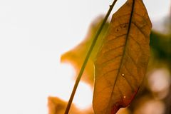 Dead leaves on stem against bright blurry background royalty free stock photos