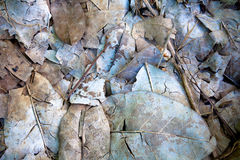 Dead leaves and twigs Royalty Free Stock Photos