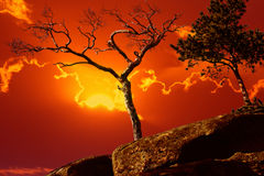 Dead and live tree at rock top on  sunset Royalty Free Stock Images