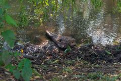 Dead log on a river bank stock photography