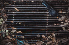 Dead Magpie on an Old Grid Royalty Free Stock Images