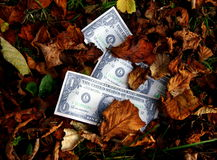 Dead Money. Several banknotes in a carpet of dead Autumn leaves Stock Photo