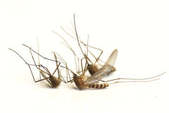 Dead mosquitoes Royalty Free Stock Images