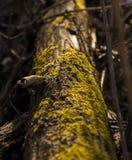 Dead Mossy Tree Stock Photo