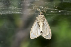 Dead moth Stock Photo