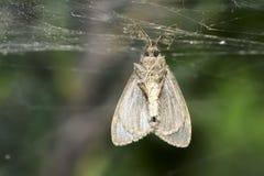 Dead moth Stock Photo