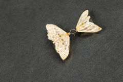 Dead moths with dark background Stock Image