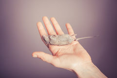 Dead mouse in a hand Royalty Free Stock Photography