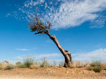 Dead and naked tree. With blue sky background stock images