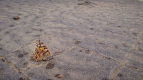 Dead orange butterfly on the pavement Stock Image
