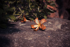 Dead orchid on a rock Stock Photography