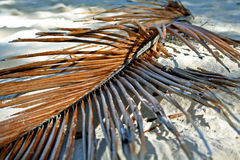 Dead Palm. A dead palm tree branch lying in the sand on a beach in Tonga, South Pacific Royalty Free Stock Image